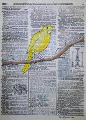 Canary yellow bird